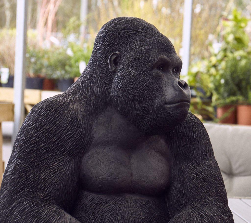 From Gorillas to Gladiators